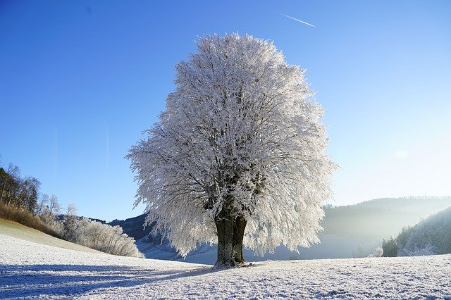 Ideal Humidity in House in Winter